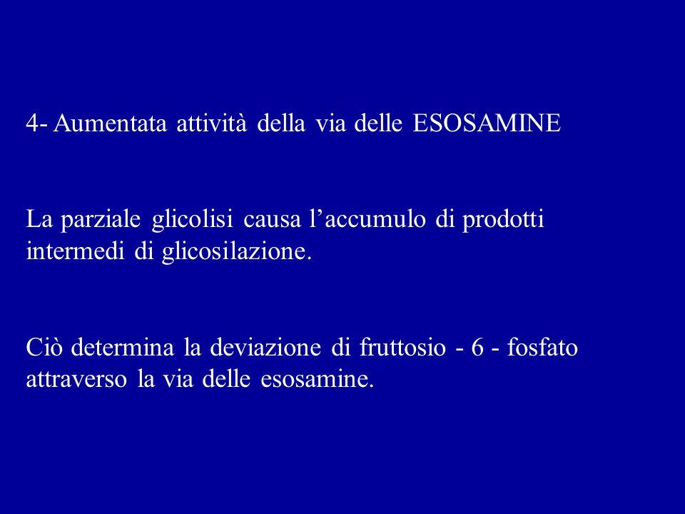4- Aumentata attività della via delle ESOSAMINE La parziale glicolisi causa laccumulo di prodotti intermedi di glicosilazione. Ciò determina la deviaz