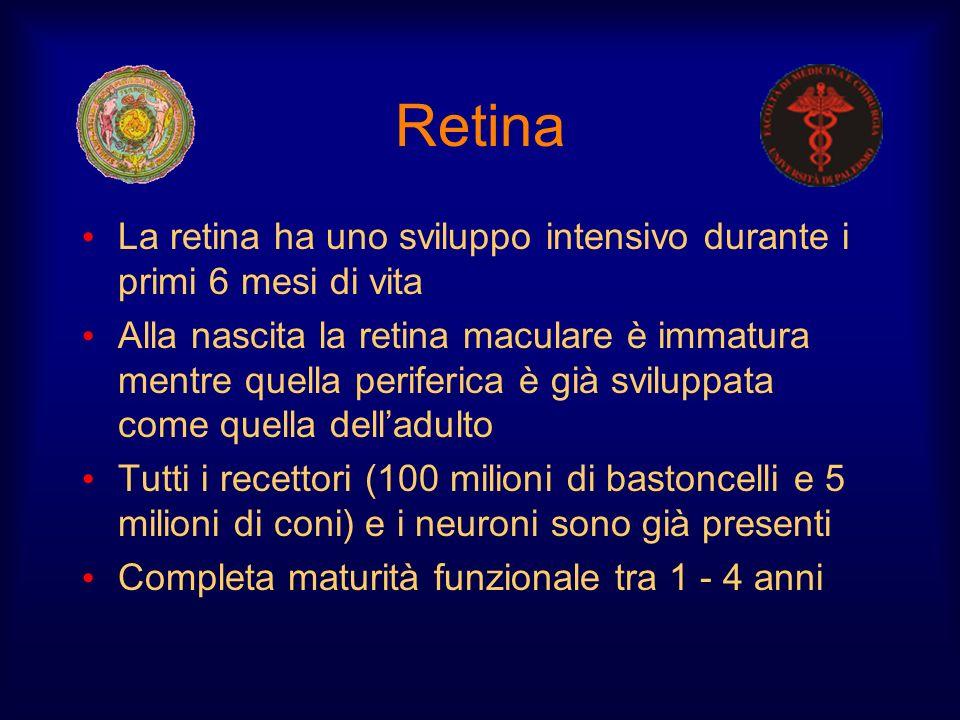 Retina La retina ha uno sviluppo intensivo durante i primi 6 mesi di vita Alla nascita la retina maculare è immatura mentre quella periferica è già sv