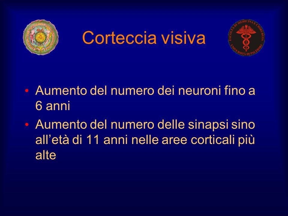 Corteccia visiva Aumento del numero dei neuroni fino a 6 anni Aumento del numero delle sinapsi sino alletà di 11 anni nelle aree corticali più alte