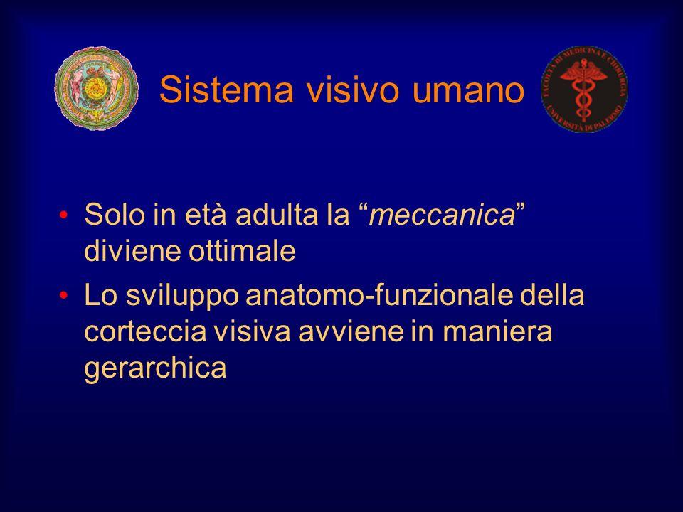 Sistema visivo umano Solo in età adulta la meccanica diviene ottimale Lo sviluppo anatomo-funzionale della corteccia visiva avviene in maniera gerarch