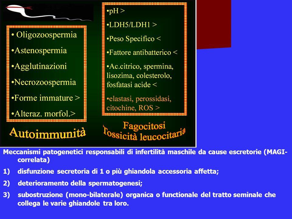 Meccanismi patogenetici responsabili di infertilità maschile da cause escretorie (MAGI- correlata) 1)disfunzione secretoria di 1 o più ghiandola acces