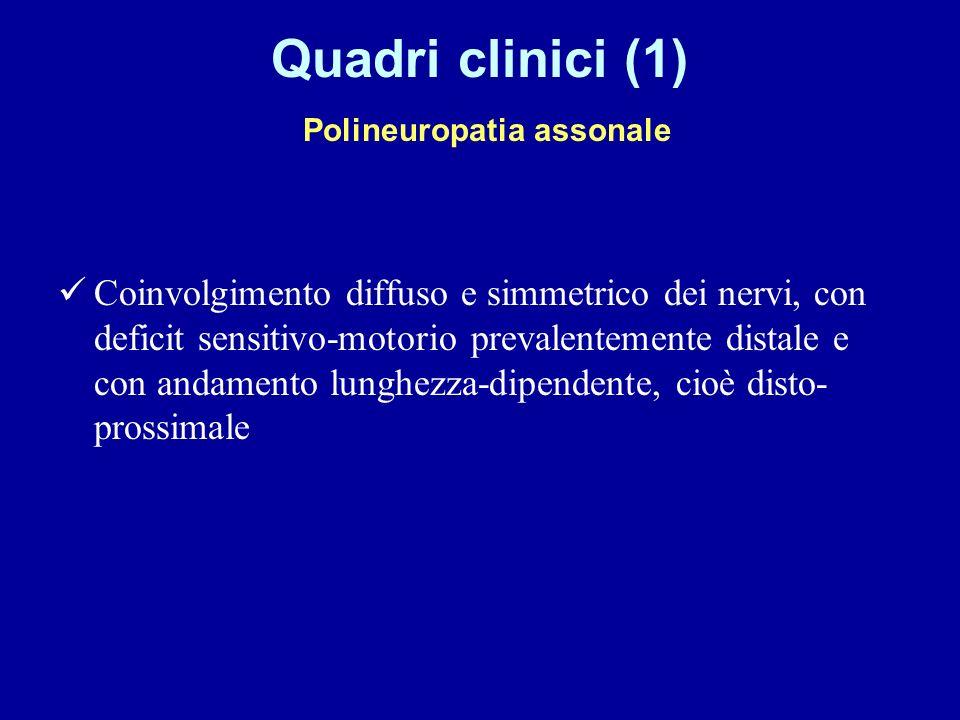 Quadri clinici (1) Polineuropatia assonale Coinvolgimento diffuso e simmetrico dei nervi, con deficit sensitivo-motorio prevalentemente distale e con