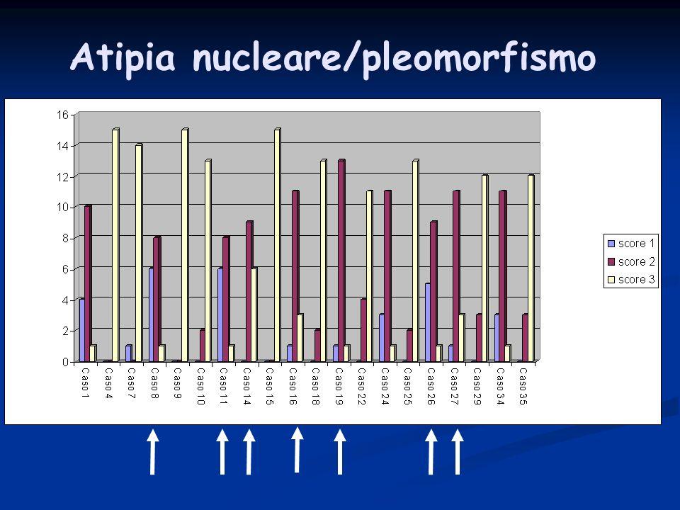 Atipia nucleare/pleomorfismo