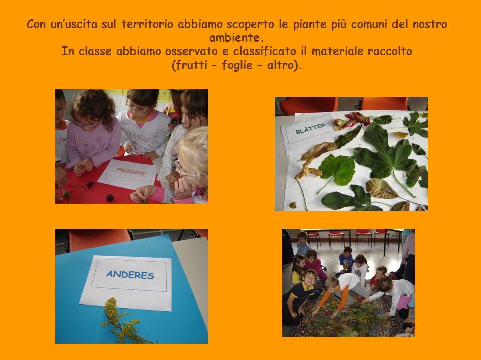 Con unuscita sul territorio abbiamo scoperto le piante più comuni del nostro ambiente. In classe abbiamo osservato e classificato il materiale raccolt