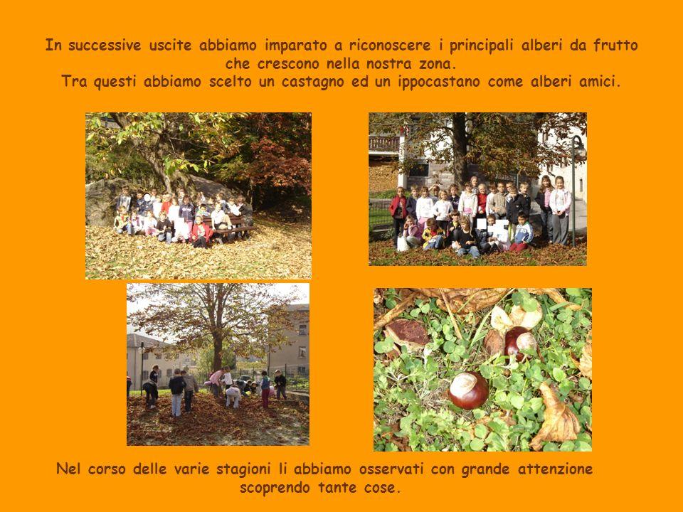 In successive uscite abbiamo imparato a riconoscere i principali alberi da frutto che crescono nella nostra zona. Tra questi abbiamo scelto un castagn