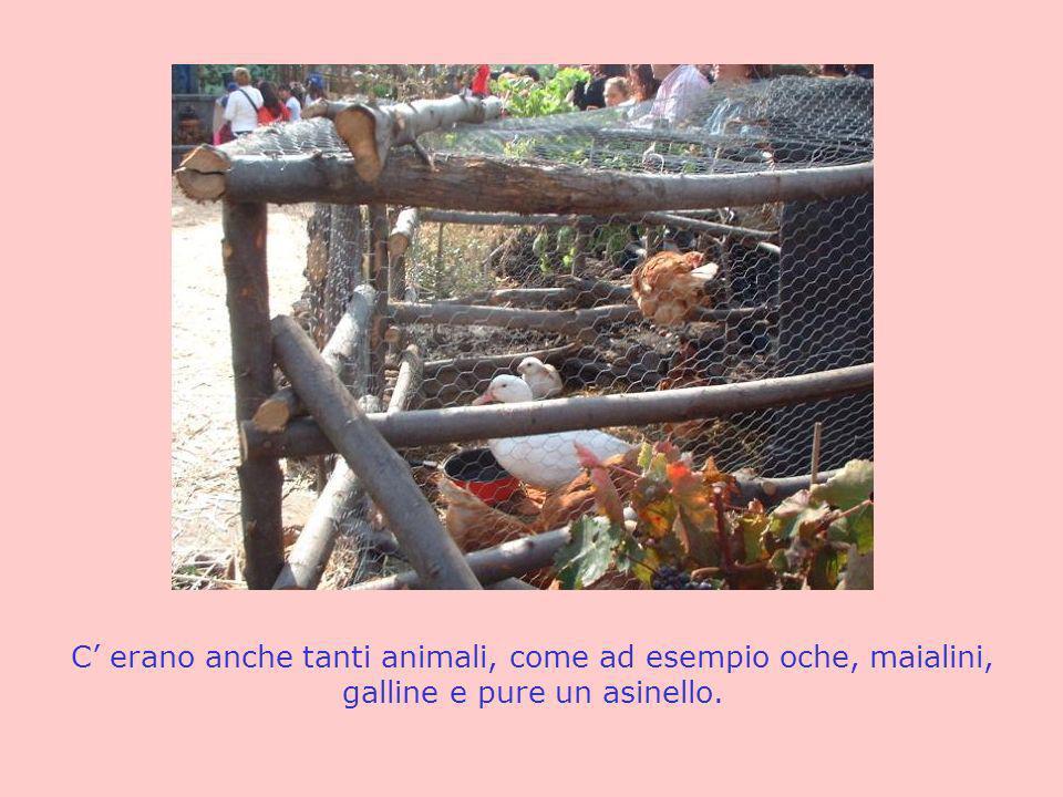 C erano anche tanti animali, come ad esempio oche, maialini, galline e pure un asinello.