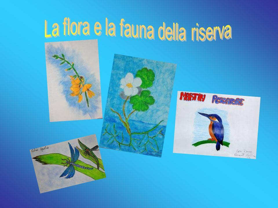 La canna domestica, Arundo donax, è una pianta dal fusto lungo, cavo e robusto.
