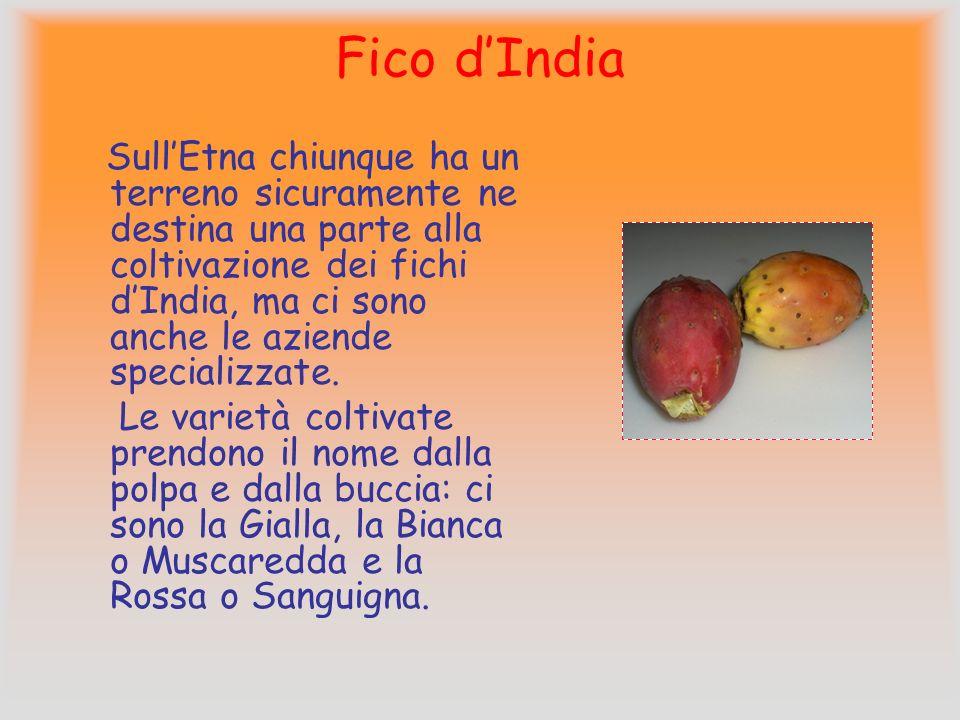 Entrambe le varietà danno frutti generalmente di piccole dimensioni. La stagione della raccolta va dalla fine di settembre alla prima metà di ottobre,