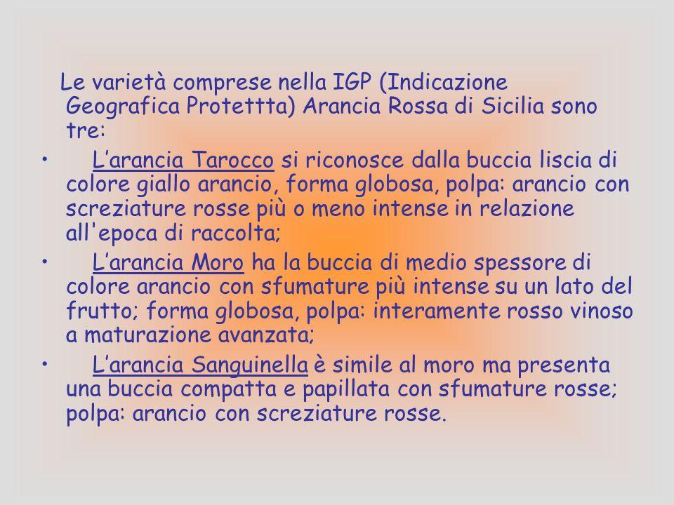 ARANCIA ROSSA DI SICILIA Larancia rossa viene prodotta nelle aree a sud dell'Etna, tra la Piana di Catania e la zona confinante della provincia di Enn