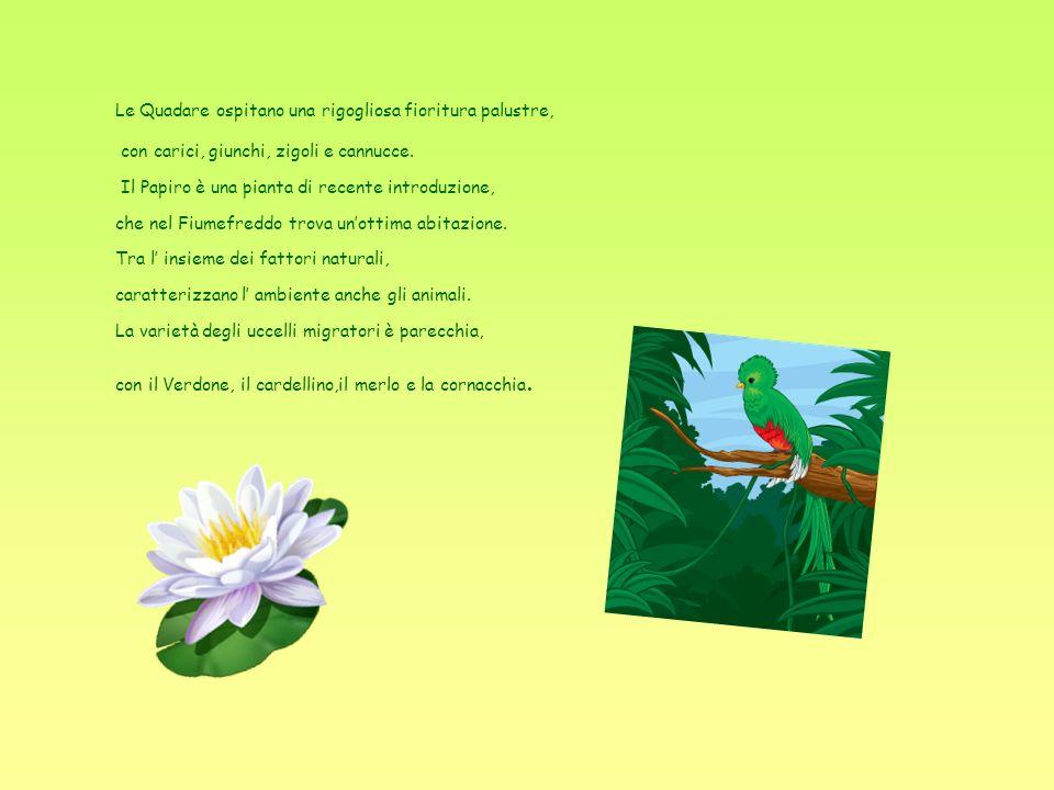 Le Quadare ospitano una rigogliosa fioritura palustre, con carici, giunchi, zigoli e cannucce.