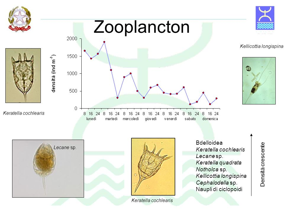 Can a community of small-bodied grazers control phytoplankton in rivers.