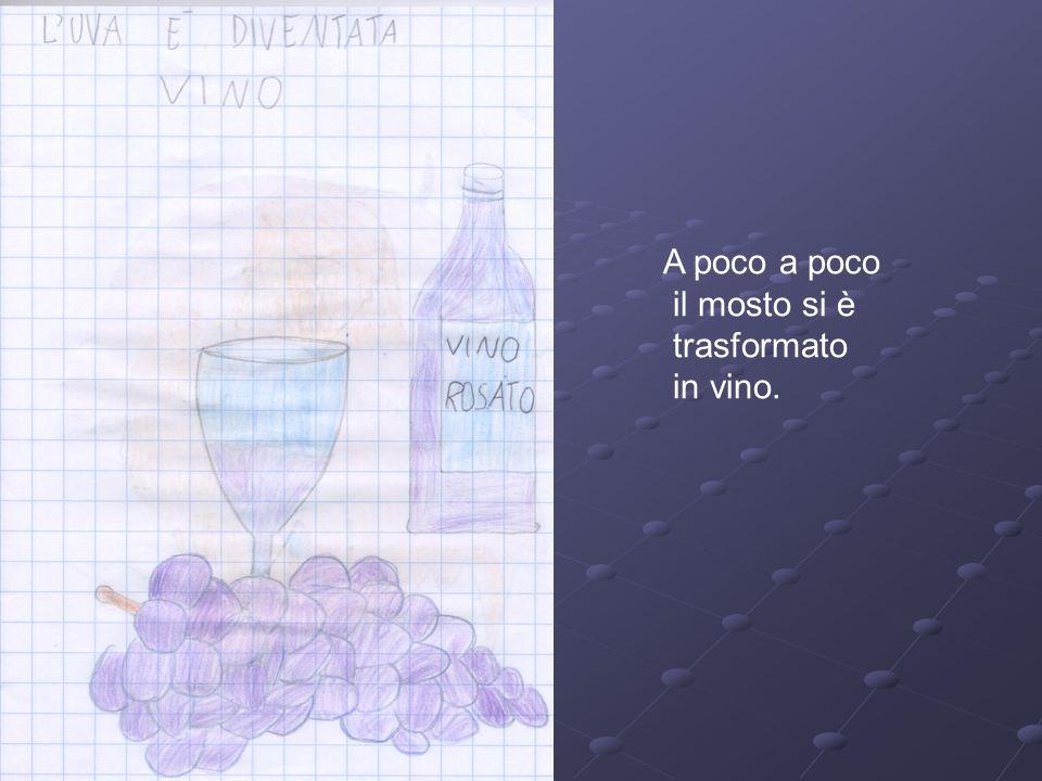 A poco a poco il mosto si è trasformato in vino.