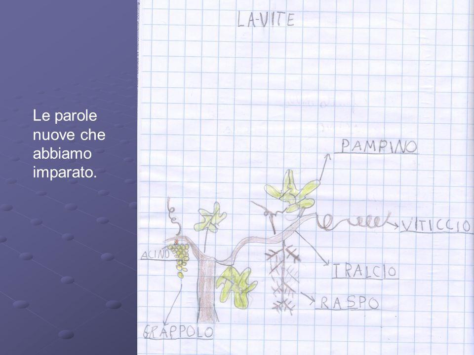 Esistono diversi tipi di uva: cè luva da vino, luva da tavola e luva passita.