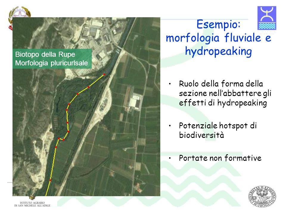 Esempio: morfologia fluviale e hydropeaking Ruolo della forma della sezione nellabbattere gli effetti di hydropeaking Potenziale hotspot di biodiversi