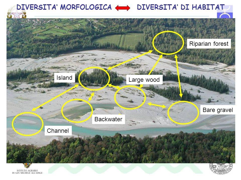 DIVERSITA MORFOLOGICA DIVERSITA DI HABITAT Large wood Backwater Channel Island Riparian forest Bare gravel
