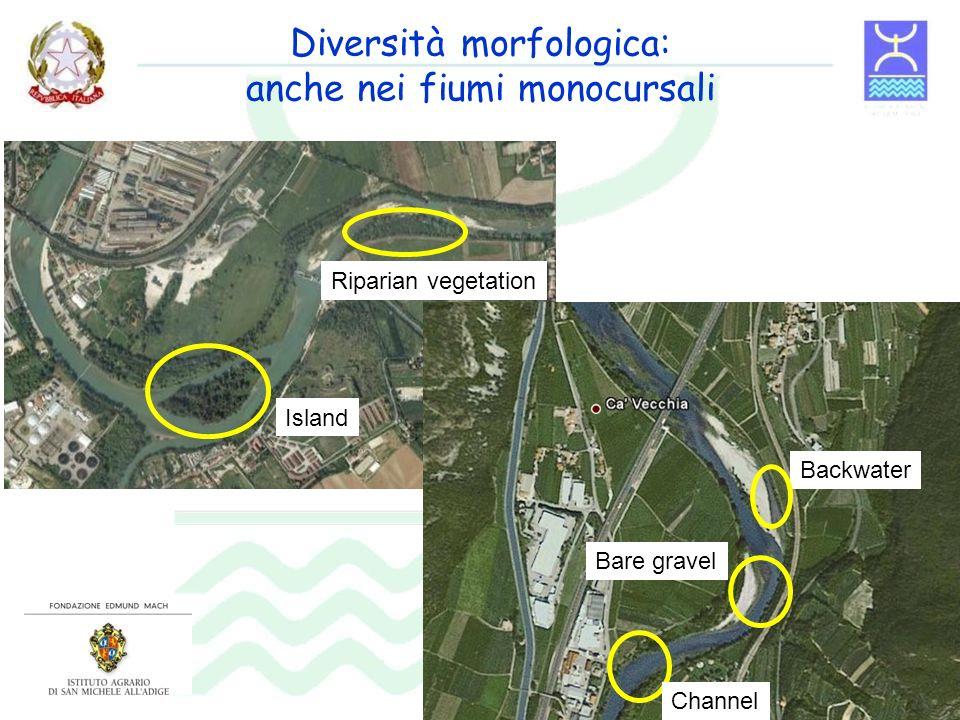 Diversità morfologica: anche nei fiumi monocursali Island Backwater Channel Riparian vegetation Bare gravel