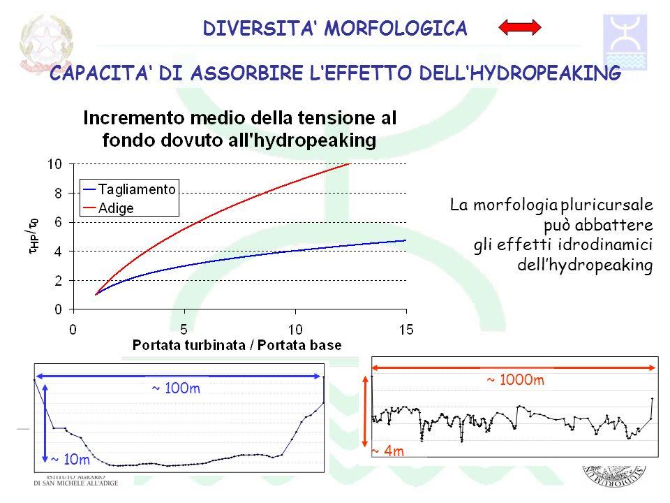 La morfologia pluricursale può abbattere gli effetti idrodinamici dellhydropeaking DIVERSITA MORFOLOGICA CAPACITA DI ASSORBIRE LEFFETTO DELLHYDROPEAKI