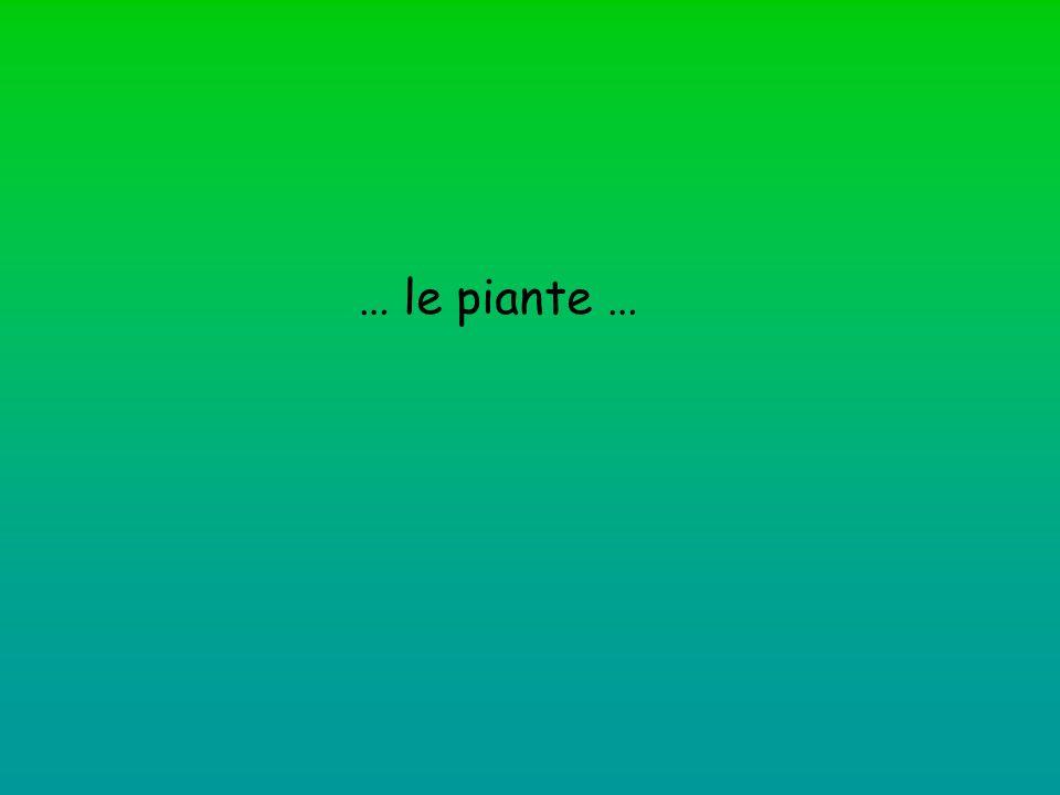 … le piante …
