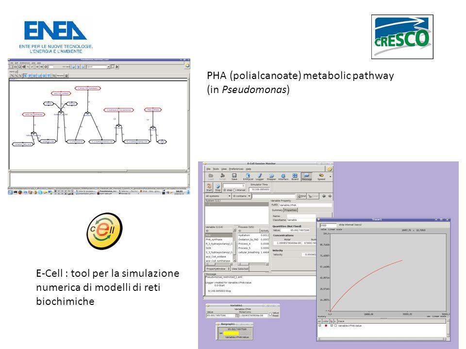 PHA (polialcanoate) metabolic pathway (in Pseudomonas) E-Cell : tool per la simulazione numerica di modelli di reti biochimiche