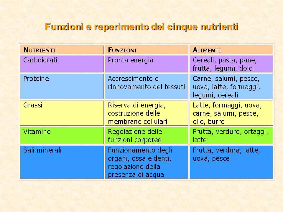 Funzioni e reperimento dei cinque nutrienti