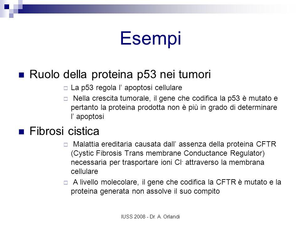 IUSS 2008 - Dr. A. Orlandi Esempi Ruolo della proteina p53 nei tumori La p53 regola l apoptosi cellulare Nella crescita tumorale, il gene che codifica