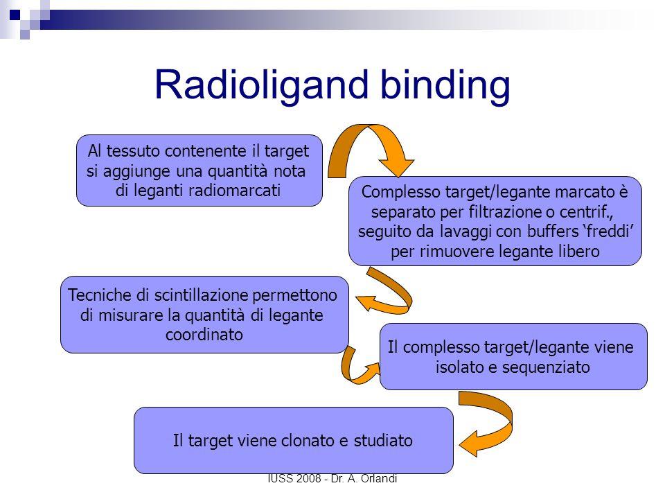 IUSS 2008 - Dr. A. Orlandi Radioligand binding Al tessuto contenente il target si aggiunge una quantità nota di leganti radiomarcati Complesso target/