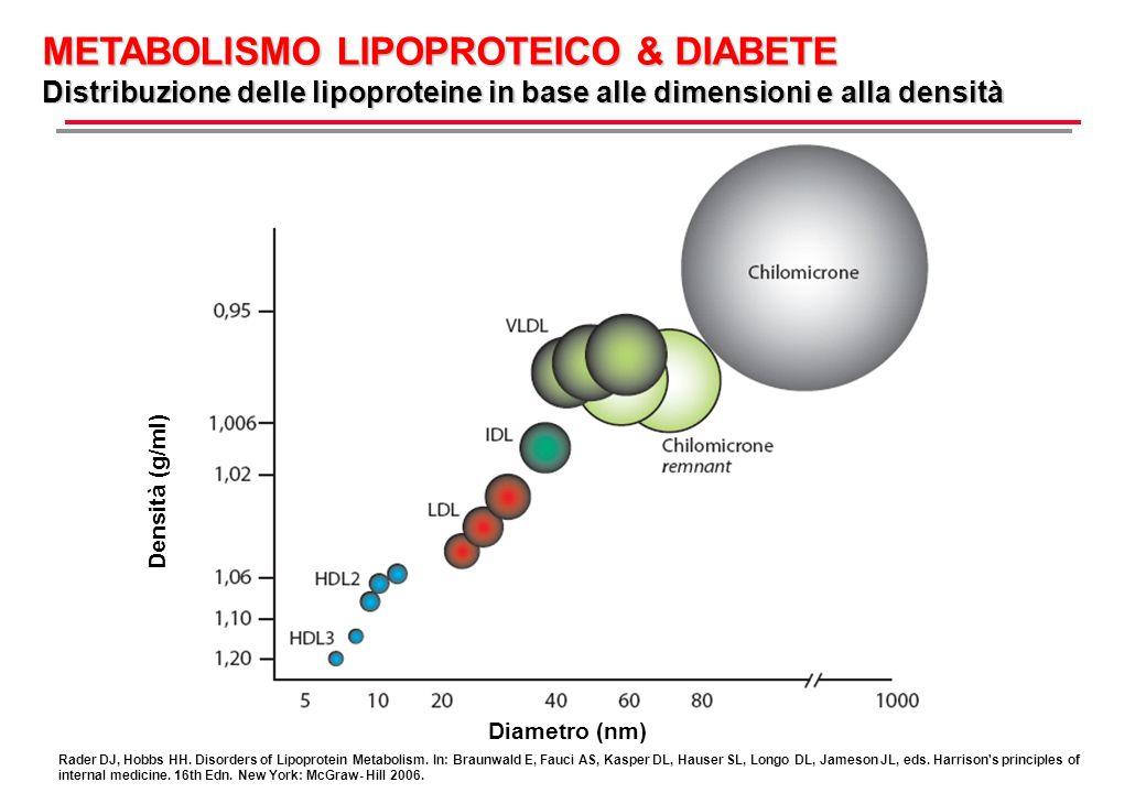 Densità (g/ml) Diametro (nm) METABOLISMO LIPOPROTEICO & DIABETE Distribuzione delle lipoproteine in base alle dimensioni e alla densità Rader DJ, Hobb