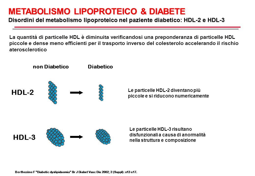 METABOLISMO LIPOPROTEICO & DIABETE Disordini del metabolismo lipoproteico nel paziente diabetico: HDL-2 e HDL-3 La quantità di particelle HDL è diminu