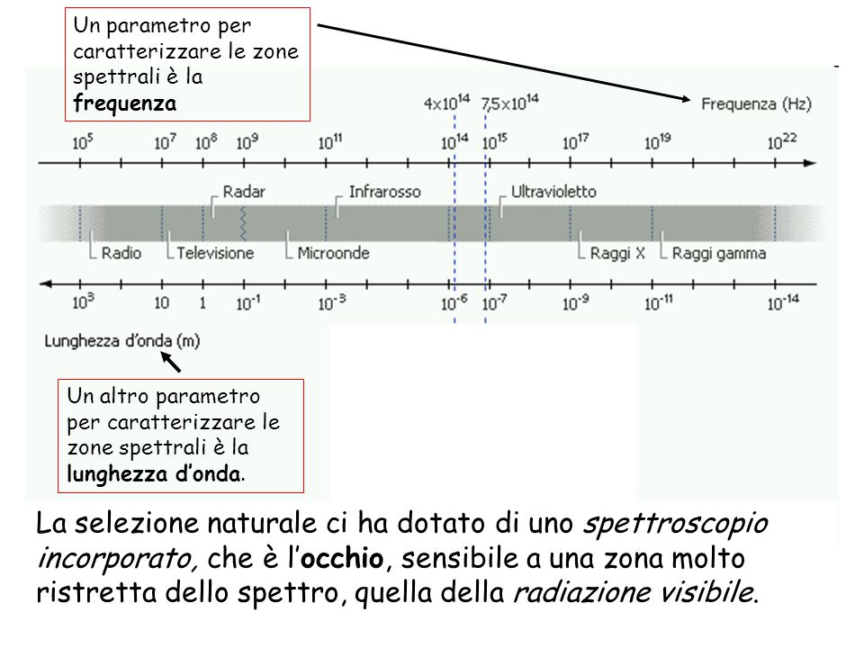 La selezione naturale ci ha dotato di uno spettroscopio incorporato, che è locchio, sensibile a una zona molto ristretta dello spettro, quella della r