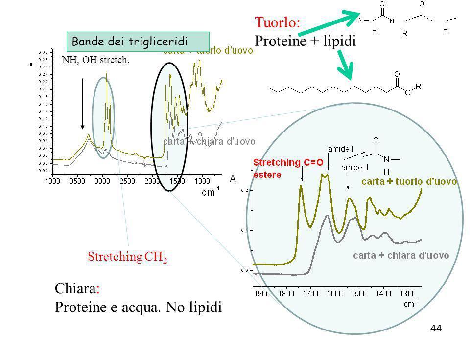 44 Stretching CH 2 Tuorlo: Proteine + lipidi Chiara: Proteine e acqua. No lipidi NH, OH stretch. Bande dei trigliceridi