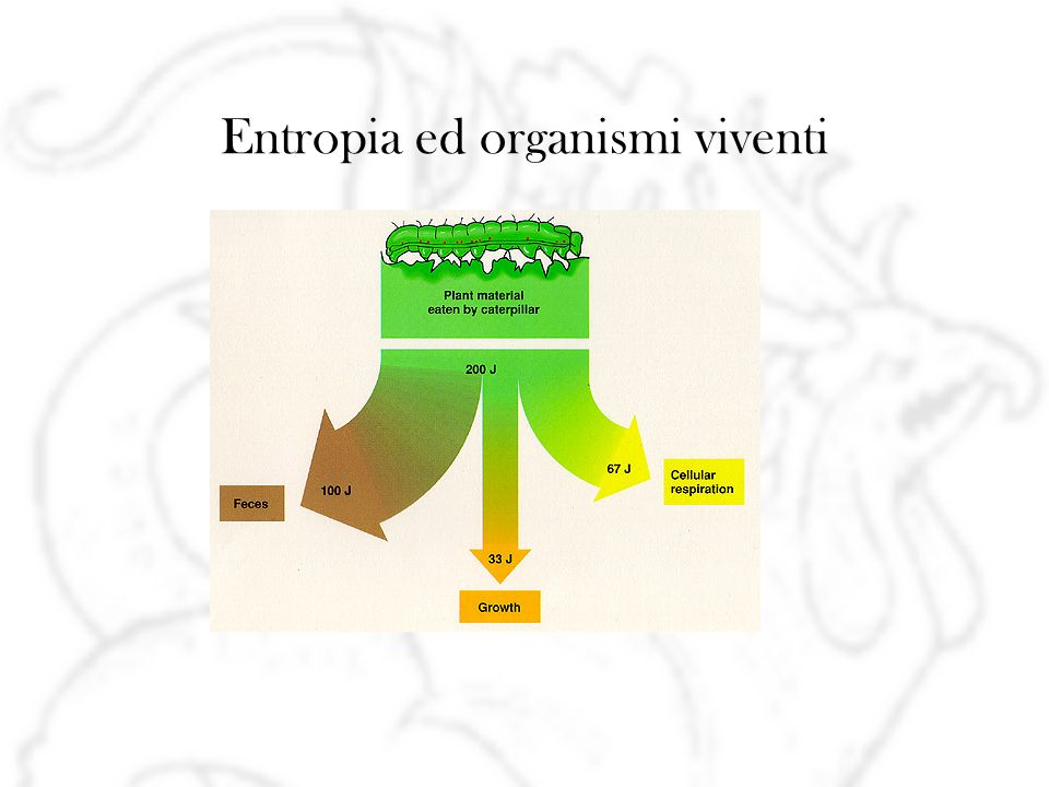 Entropia ed organismi viventi