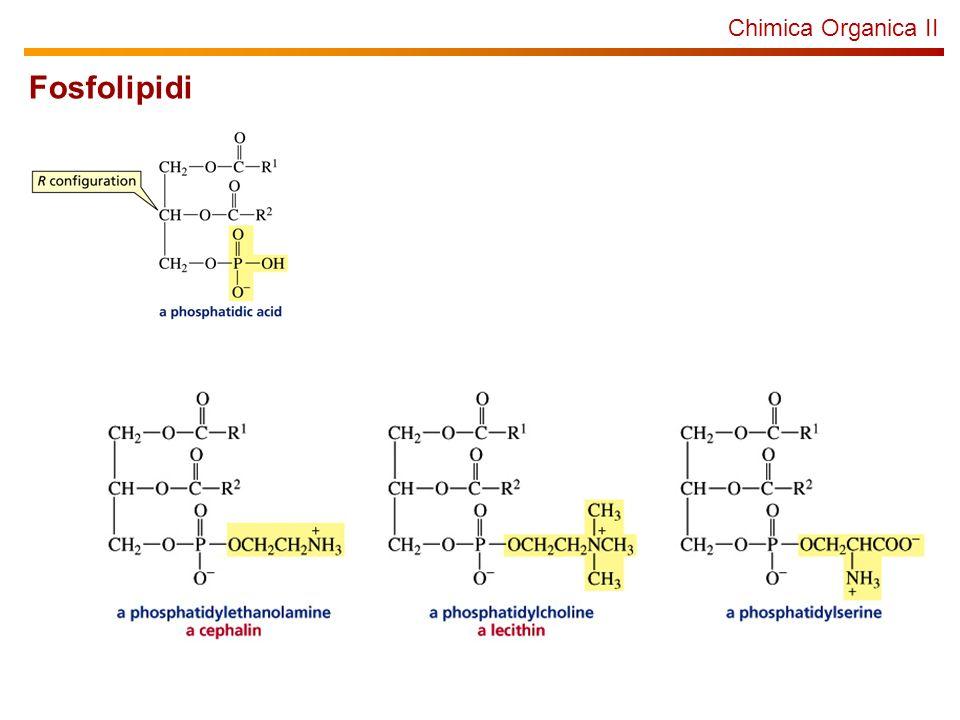 Chimica Organica II Fosfolipidi