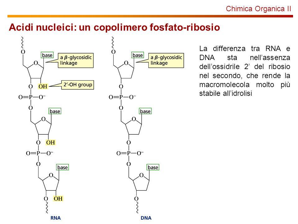 Chimica Organica II Acidi nucleici: un copolimero fosfato-ribosio La differenza tra RNA e DNA sta nellassenza dellossidrile 2 del ribosio nel secondo,