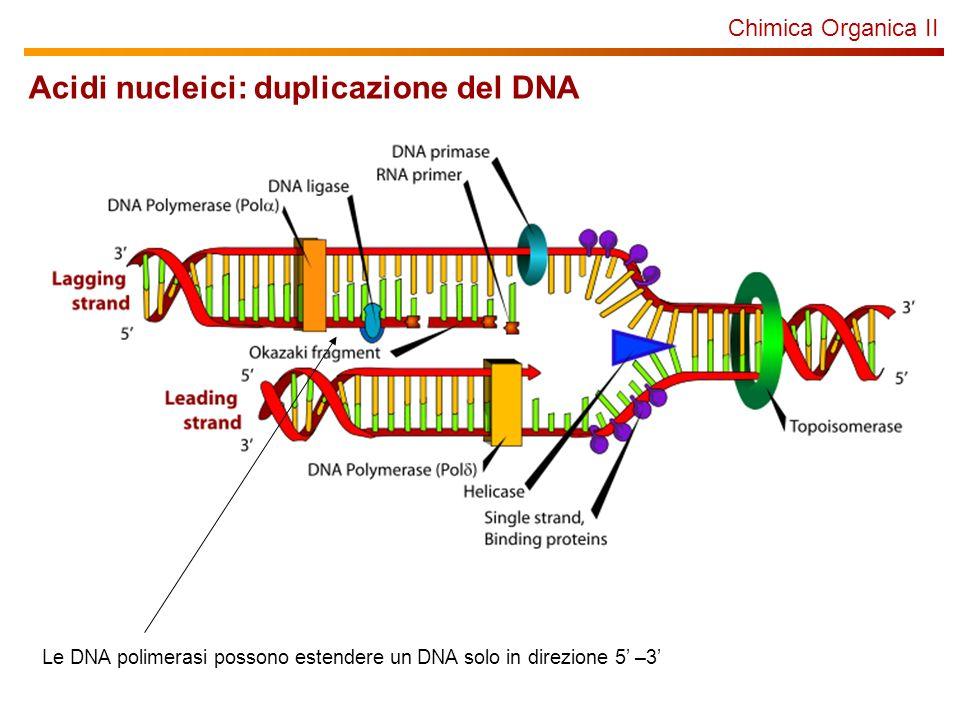 Chimica Organica II Acidi nucleici: duplicazione del DNA Le DNA polimerasi possono estendere un DNA solo in direzione 5 –3