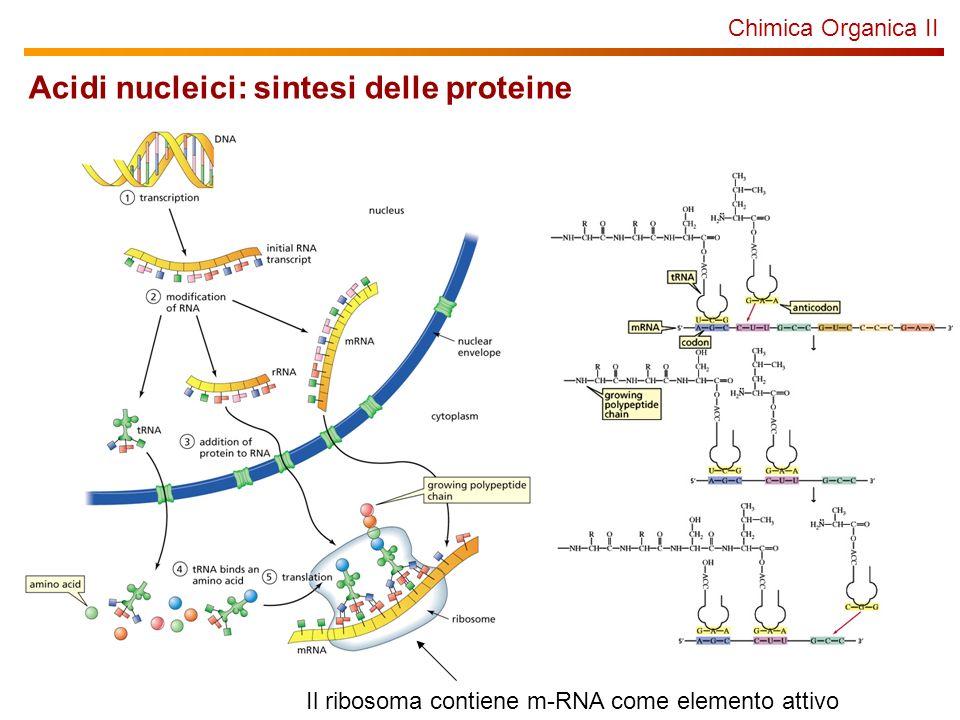 Chimica Organica II Acidi nucleici: sintesi delle proteine Il ribosoma contiene m-RNA come elemento attivo