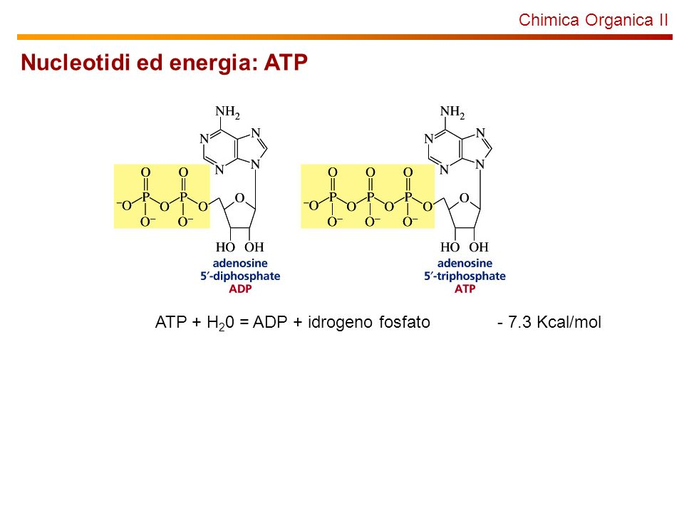 Chimica Organica II Nucleotidi ed energia: ATP ATP + H 2 0 = ADP + idrogeno fosfato- 7.3 Kcal/mol