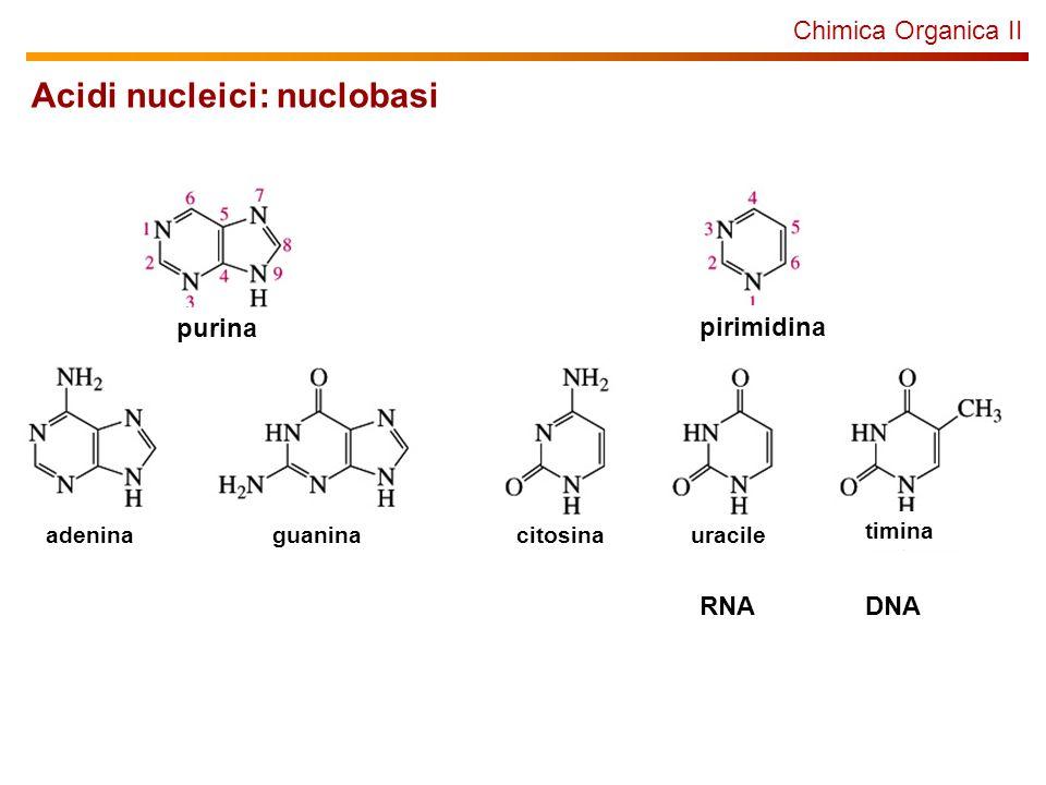 Chimica Organica II Acidi nucleici: nuclobasi purina pirimidina adeninaguaninacitosinauracile timina RNADNA