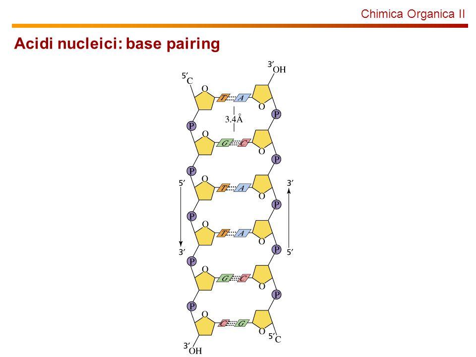 Chimica Organica II Acidi nucleici: base pairing