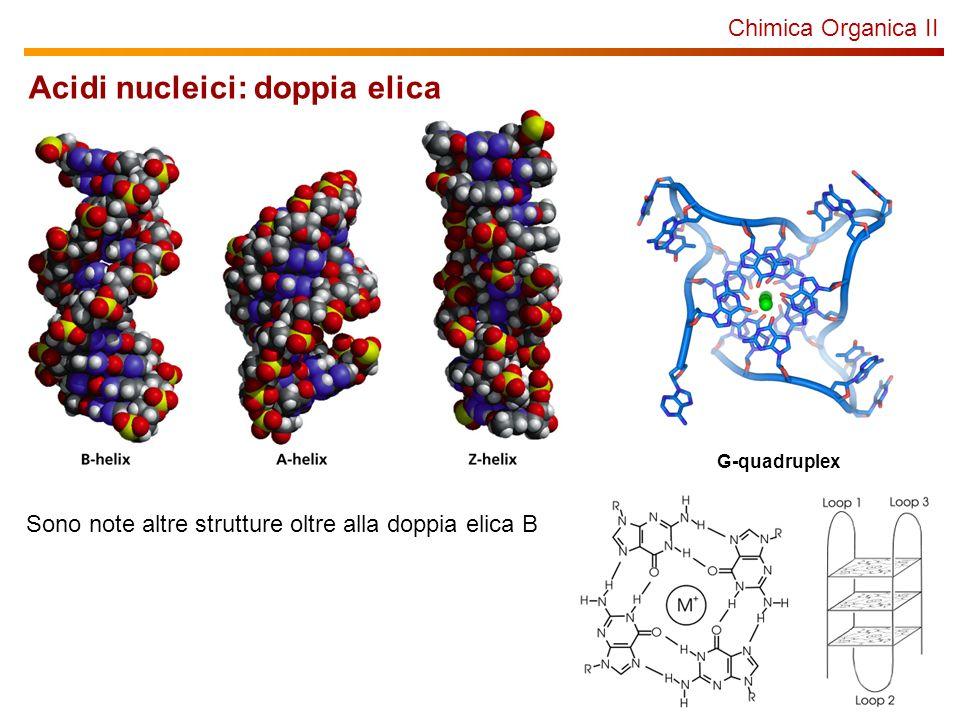Chimica Organica II Acidi nucleici: doppia elica G-quadruplex Sono note altre strutture oltre alla doppia elica B