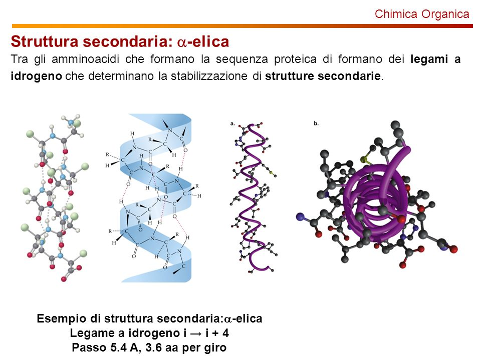 Chimica Organica Struttura secondaria: -elica Tra gli amminoacidi che formano la sequenza proteica di formano dei legami a idrogeno che determinano la stabilizzazione di strutture secondarie.