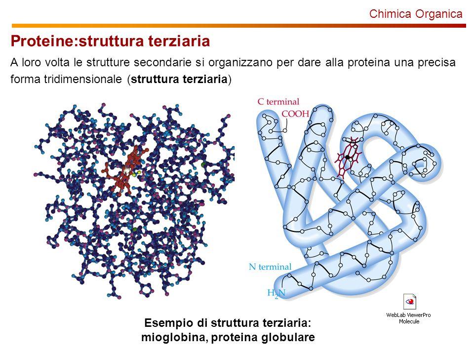 Chimica Organica Esempio di struttura terziaria: mioglobina, proteina globulare Proteine:struttura terziaria A loro volta le strutture secondarie si organizzano per dare alla proteina una precisa forma tridimensionale (struttura terziaria)