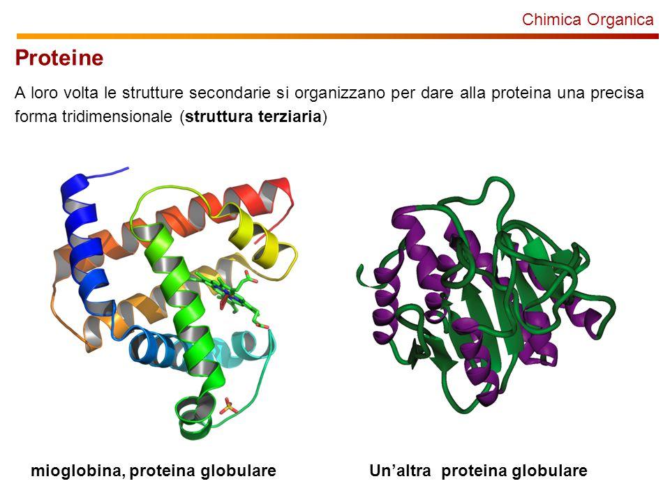 Chimica Organica Proteine A loro volta le strutture secondarie si organizzano per dare alla proteina una precisa forma tridimensionale (struttura terziaria) mioglobina, proteina globulareUnaltra proteina globulare
