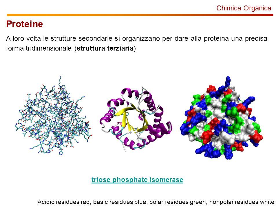 Chimica Organica Proteine A loro volta le strutture secondarie si organizzano per dare alla proteina una precisa forma tridimensionale (struttura terziaria) triose phosphate isomerase Acidic residues red, basic residues blue, polar residues green, nonpolar residues white