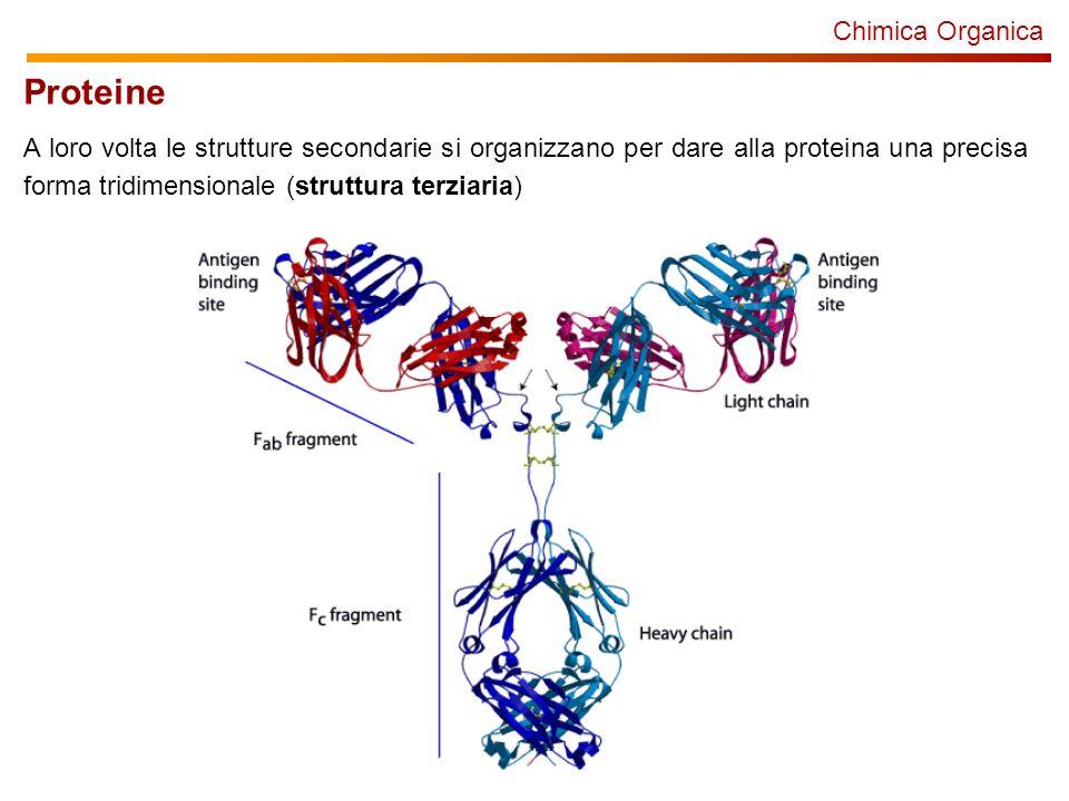Chimica Organica Proteine A loro volta le strutture secondarie si organizzano per dare alla proteina una precisa forma tridimensionale (struttura terziaria)