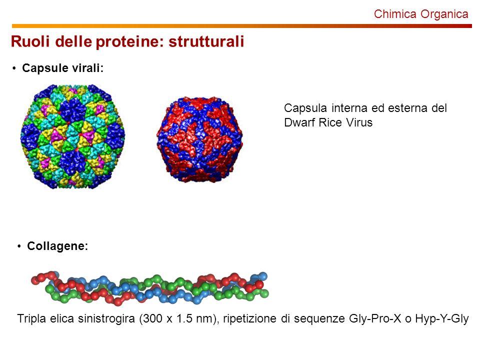 Chimica Organica Ruoli delle proteine: strutturali Capsule virali: Capsula interna ed esterna del Dwarf Rice Virus Collagene: Tripla elica sinistrogira (300 x 1.5 nm), ripetizione di sequenze Gly-Pro-X o Hyp-Y-Gly