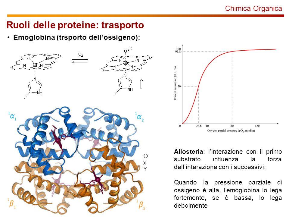Chimica Organica Ruoli delle proteine: trasporto Emoglobina (trsporto dellossigeno): Allosteria: linterazione con il primo substrato influenza la forza dellinterazione con i successivi.
