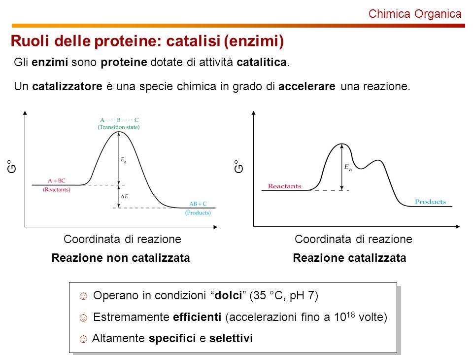 Chimica Organica Gli enzimi sono proteine dotate di attività catalitica. Un catalizzatore è una specie chimica in grado di accelerare una reazione. Co