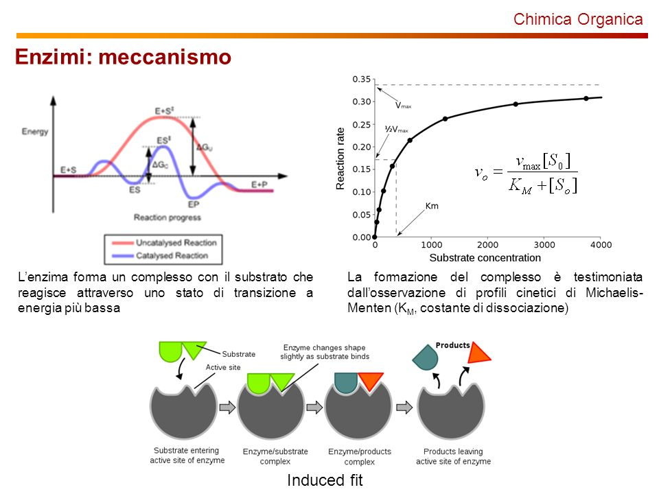 Chimica Organica Enzimi: meccanismo Lenzima forma un complesso con il substrato che reagisce attraverso uno stato di transizione a energia più bassa La formazione del complesso è testimoniata dallosservazione di profili cinetici di Michaelis- Menten (K M, costante di dissociazione) Induced fit