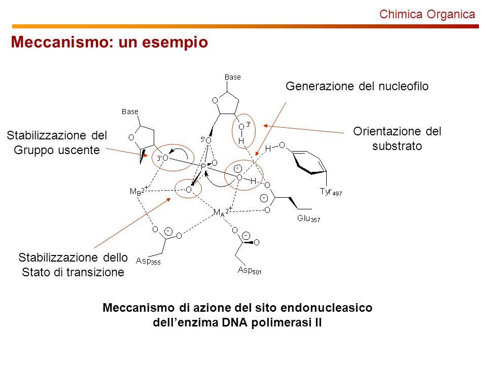 Chimica Organica Meccanismo: un esempio Meccanismo di azione del sito endonucleasico dellenzima DNA polimerasi II Generazione del nucleofilo Stabilizzazione dello Stato di transizione Stabilizzazione del Gruppo uscente Orientazione del substrato