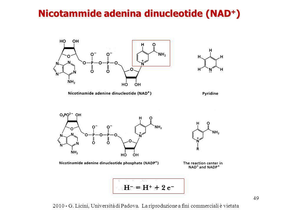 Nicotammide adenina dinucleotide (NAD + ) 2010 - G. Licini, Università di Padova. La riproduzione a fini commerciali è vietata 49